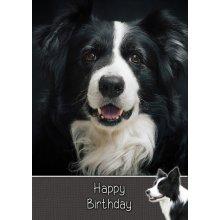"Border Collie Dog Birthday Greeting Card 8""x5.5"""