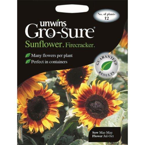 Unwins Grow Your Own Dwarf Firecracker Sunflower Flower Seeds