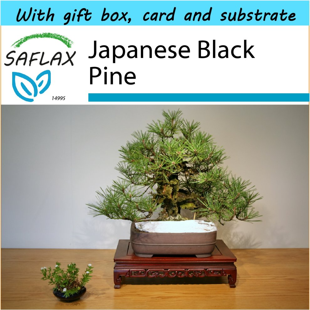SAFLAX Gift Set - Bonsai - Japanese
