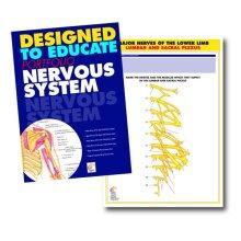 Nervous System Education Manual
