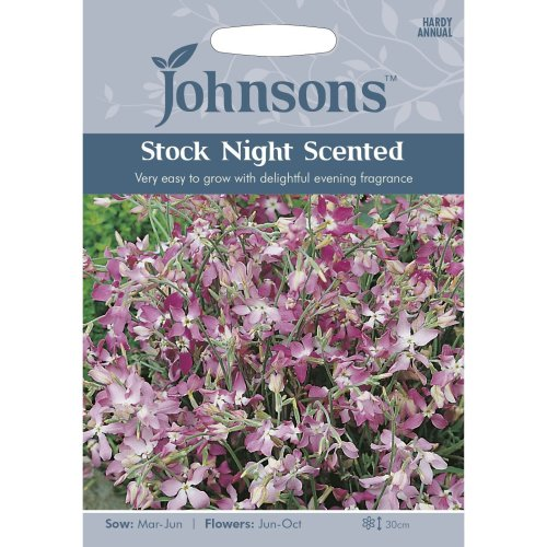 Johnsons Seeds - Pictorial Pack - Flower - Stock Night Scented - 2000 Seeds