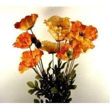 Three Stems of Amber Poppies