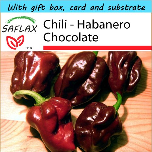 SAFLAX Gift Set - Chili - Habanero Chocolate - Capsicum chinense - 10 seeds - With gift box, card, label and potting substrate
