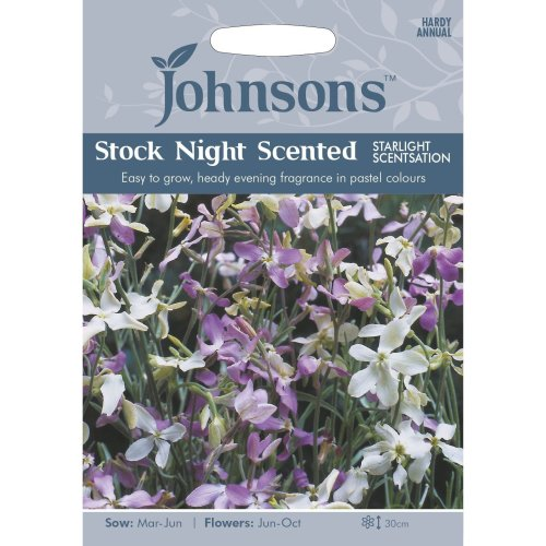 Johnsons Seeds - Pictorial Pack - Flower - Stock Night Scented Starlight Scentsation - 1000 Seeds