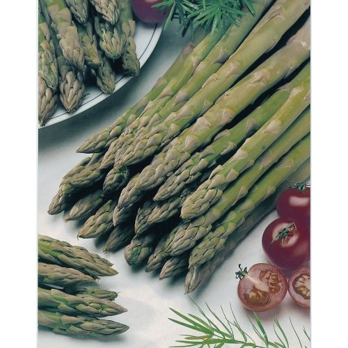 Vegetable - Asparagus - Connover's Colossal - 250 Seeds