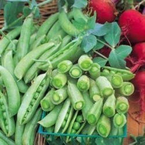 Vegetable - Pea - Sugar Snap - 40 Seeds
