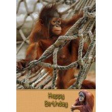 """Orangutan Birthday Greeting Card 8""""x5.5"""""""