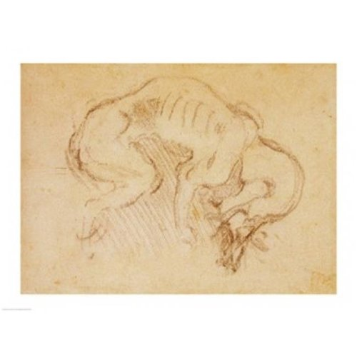 Study of A Dog Poster Print by Michelangelo Buonarroti - 24 x 18 in.