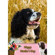 "Springer Spaniel Mother's Day Greeting Card 8""x5.5"""