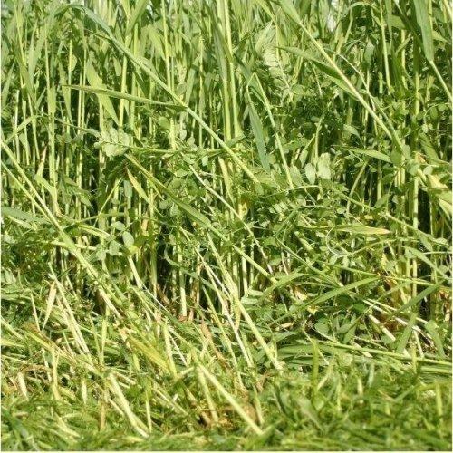Green Manure - Overwinter Nitrogen Fixing Rye Vetch Mix - 50g