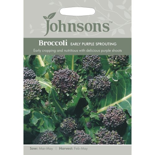 Johnsons Seeds - Pictorial Pack - Vegetable - Broccoli (Sprouting) Early purple - 500 Seeds