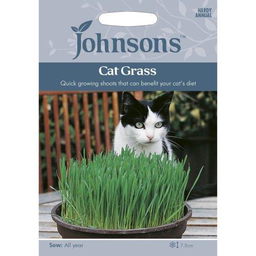 Johnsons Seeds - Pictorial Pack - Flower - Cat Grass - 25g Seeds