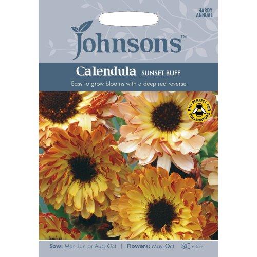 Johnsons Seeds - Pictorial Pack - Flower - Calendula Sunset Buff - 75 Seeds