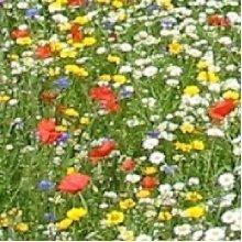 Wild Flower - Economy Flower Mixture - Cornfield Annual - 25g