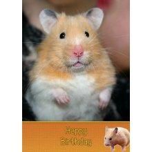 """Hamster Birthday Greeting Card 8""""x5.5"""""""