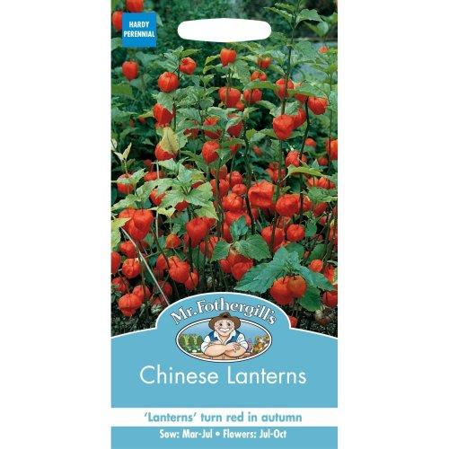 Mr Fothergills - Pictorial Packet - Flower - Chinese Lanterns - 150 Seeds