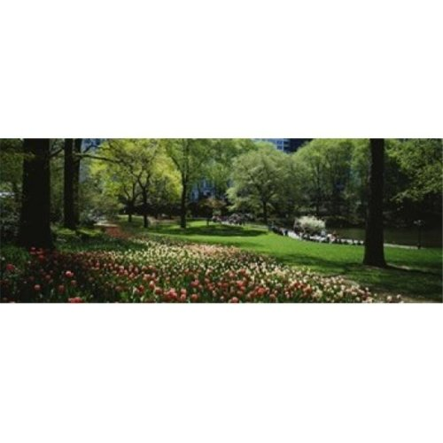 Flowers in a park  Central Park  Manhattan  New York City  New York State  USA Poster Print by  - 36 x 12