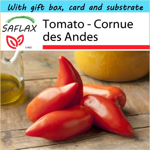 SAFLAX Gift Set - Tomato - Cornue des Andes - Lycopersicon esculentum - 10 seeds - With gift box, card, label and potting substrate