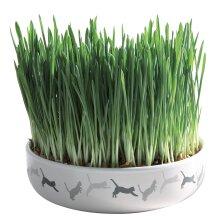 Trixie 42341ceramic Cat Grass - Ceramic Bowl -  trixie ceramic bowl grass cat