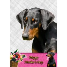 """Doberman Mother's Day Greeting Card 8""""x5.5"""""""