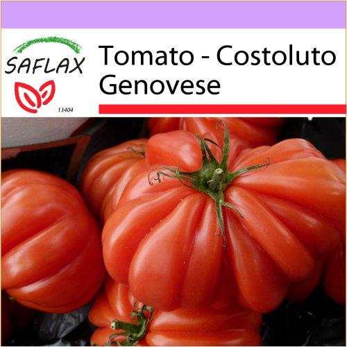 SAFLAX  - Tomato - Costoluto Genovese - Lycopersicon esculentum - 10 seeds