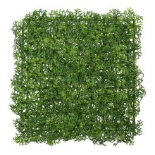 10 in. x 10 in. Button Fern Matt