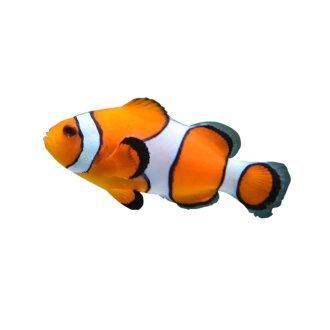 Fish & Aquarium Supplies