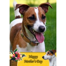 """Jack Russell Mother's Day Greeting Card 8""""x5.5"""""""