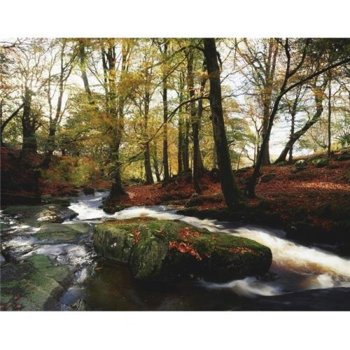 Sally Gap County Wicklow Ireland - Creek in Woods in Autumn Poster Print by The Irish Image Collection, 17 x 13
