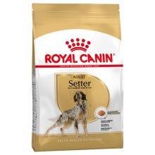 Royal Canin Setter Adult Dry dog Food 12kg bag
