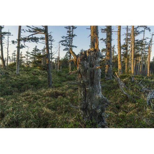 The Ancient Forests of Naikoon Provincial Park - Haida Gwaii British Columbia Canada Poster Print - 19 x 12 in.