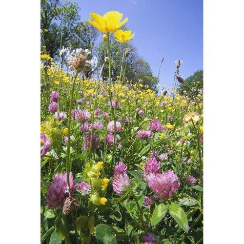 Wild Flower - Flower Mixture - Clay Soils - 4g