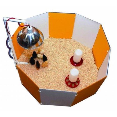 Baby Chick Starter Home Orange & White 3700
