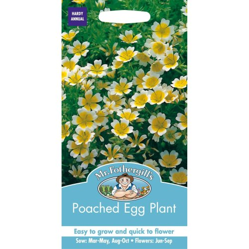 Mr Fothergills - Pictorial Packet - Flower - Poached Egg Plant - 100 Seeds