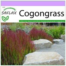 SAFLAX - Cogongrass - 50 seeds  - Imperata cylindrica