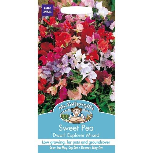 Mr Fothergills - Pictorial Packet - Flower - Sweet Pea  - Dwarf Explorer Mixed - 25 Seeds