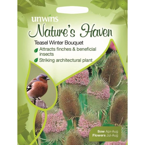 Unwins Pictorial Packet - Natures Heaven Teasel Winter Bouquet - 200 Seeds