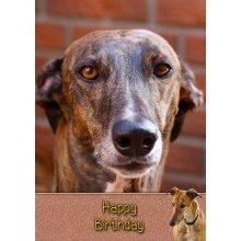 "Greyhound Birthday Greeting Card 8""x5.5"""