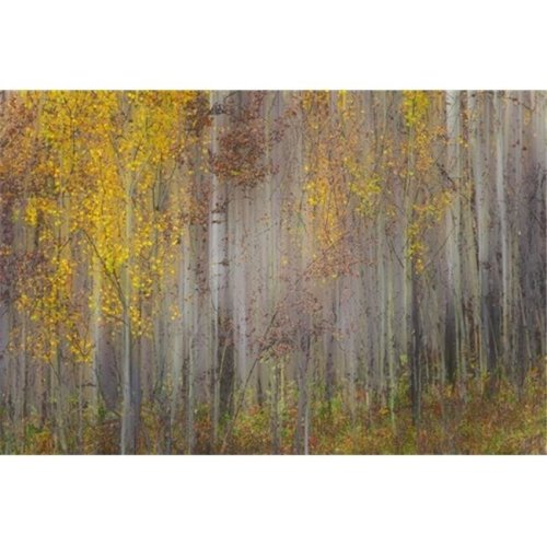 Painting of Trees in a Forest in Autumn Colours - Alberta Canada Poster Print by Ron Harris, 19 x 12