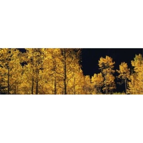 Aspen trees in autumn  Colorado  USA Poster Print by  - 36 x 12