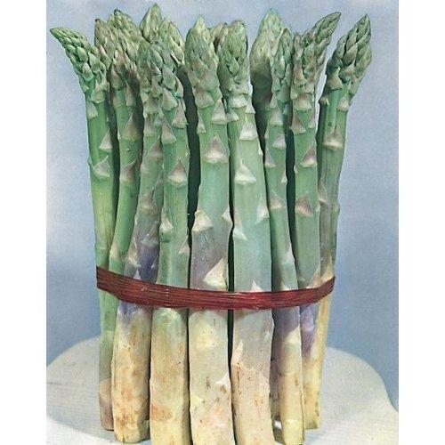 Vegetable - Asparagus - Mary Washington - 80 Seeds