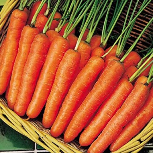 Carrot - Early Nantes - Seeds 1 Pack