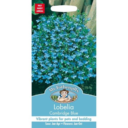 Mr Fothergills - Pictorial Packet - Flower - Lobelia Cambridge Blue - 2500 Seeds