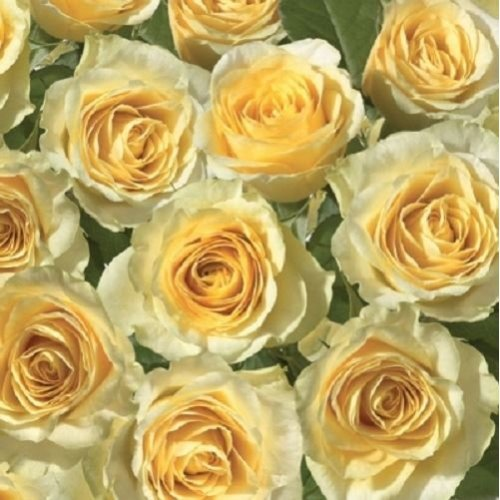 4 x Paper Napkins - Yellow Rose - Ideal for Decoupage / Napkin Art