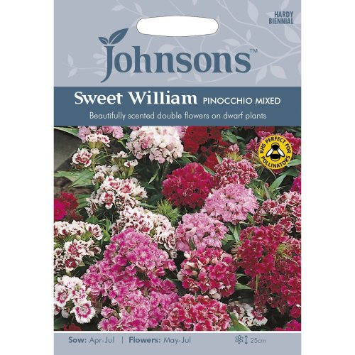 Johnsons Seeds - Pictorial Pack - Flower - Sweet William Dwarf Double Pinocchio Mixed - 500 Seeds