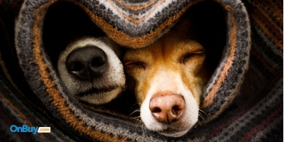 How To Create The Ultimate Den For Your Dog