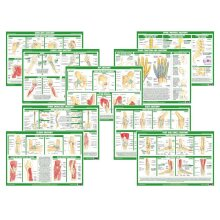 Human Body Joint Anatomy Posters - Set of 9