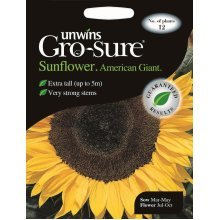 Unwins Grow Your Own American Giant F1 Sunflower Flower Seeds