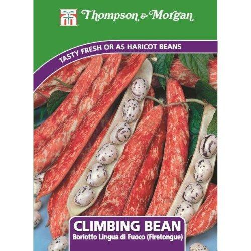 Thompson & Morgan - Vegetables - Climbing Bean Borlotto Lingua (Firetongue) - 75 Seed