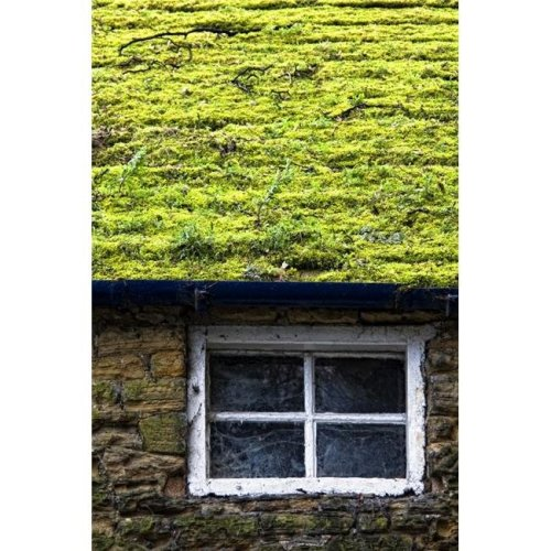 Cottage with Grass Growing On Roof Poster Print by John Short, 11 x 17